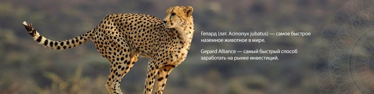 Логотип компании Gepard Alliance