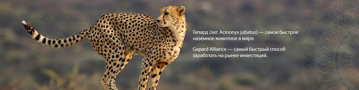 Логотип компании Gepard Alliance